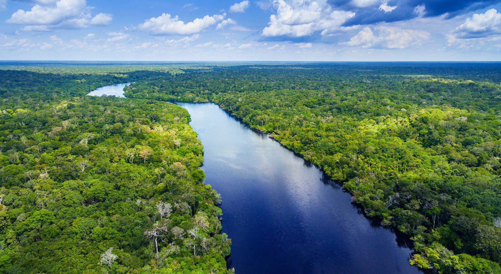 Imagem de uma floresta, com um lago entre as árvores.