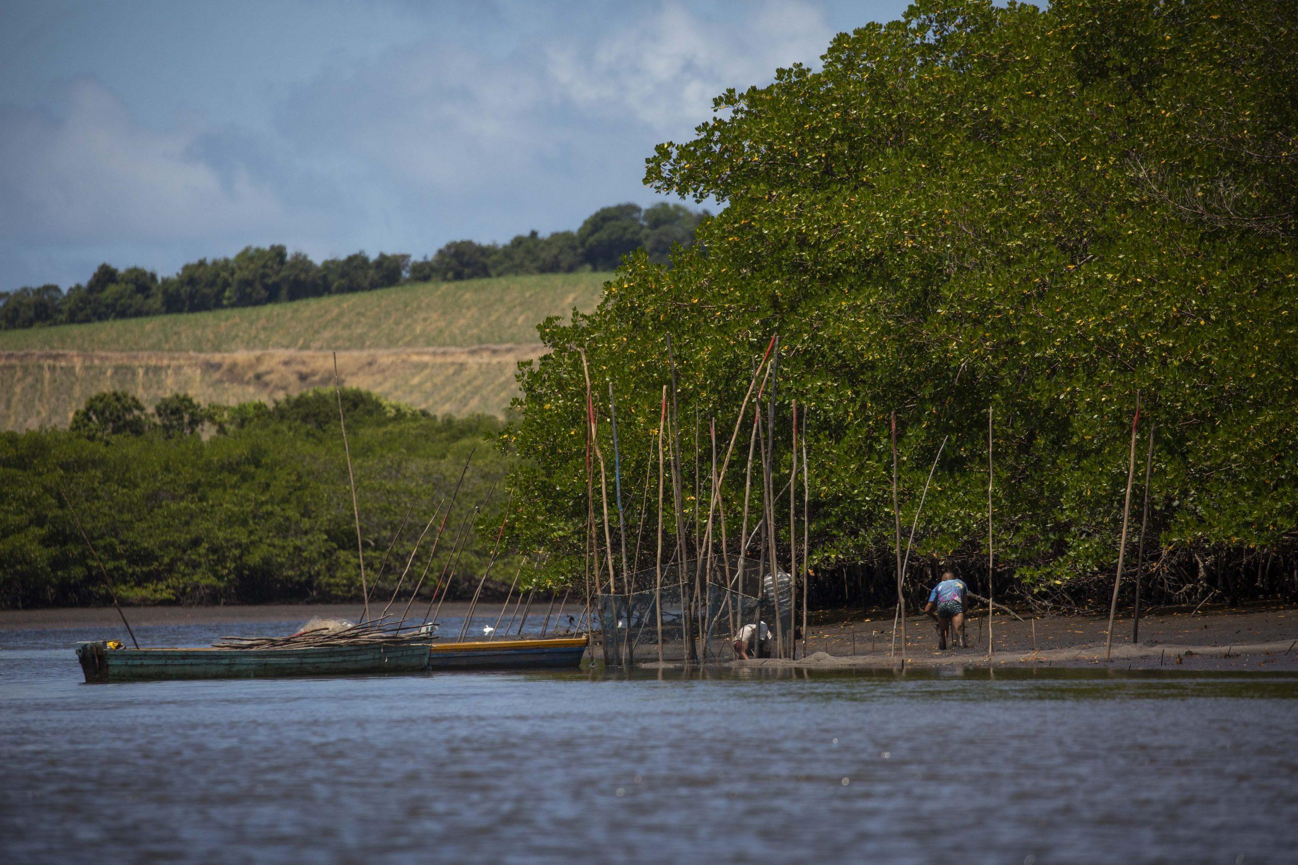 Imagens dos trabalhos de monitoramento de Beatrice Padovani e sua equipe mangue na região do Rio Formoso, em Tamandaré, PE