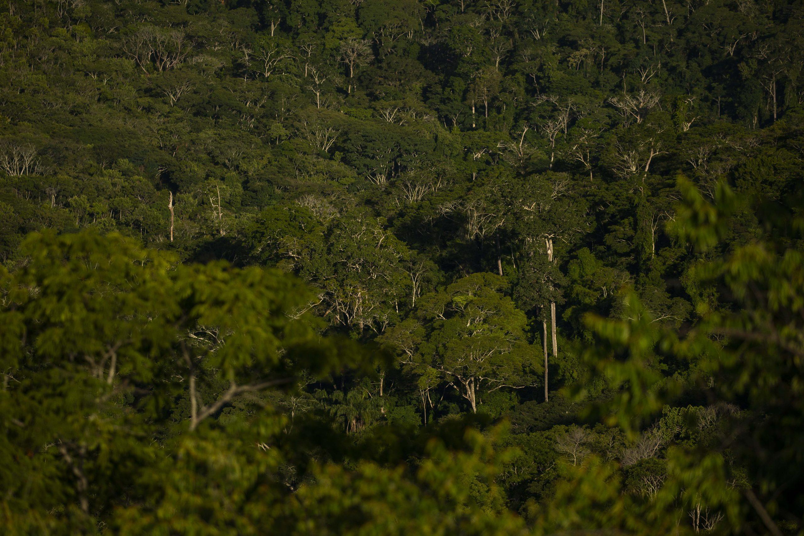 Imagens da RPPN Feliciano Miguel Abdala em Minas Gerais, lar dos Muriquis do Norte e local de estudo da pesquisadora Karen Strier